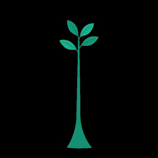 Plante-test-marcel-mezy